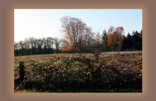 2009-11-13 fields