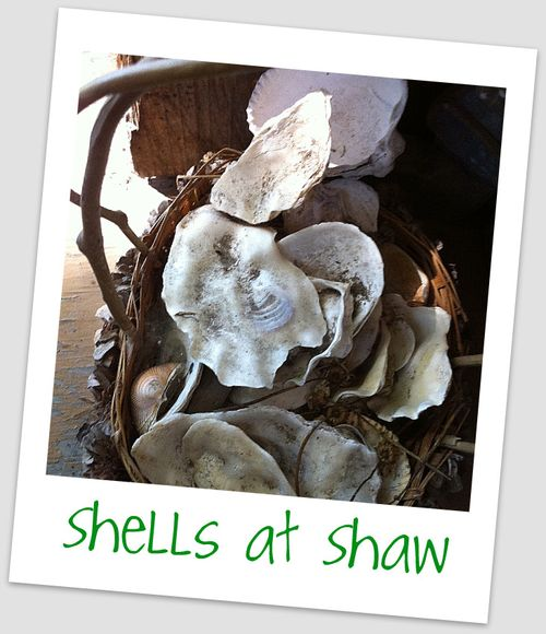 Shells at shaw