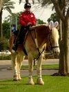 Horse_bunny_ears